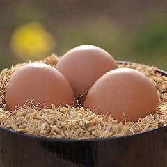 「卵」大国・日本の意外な弱点!?