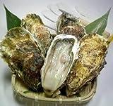リアスビックワン特選Lサイズ5個+オイスターナイフ&軍手セット 「宮城三陸産殻付き牡蠣:成熟した二年~三年カキ」【かき松島こうは】