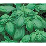 Basil Italian Large Leaf 40,000 Seeds BULK Great Garden Herb