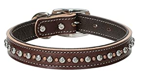 Weaver Leather Rockstar Collar, 1 x 21-Inch, Sunset