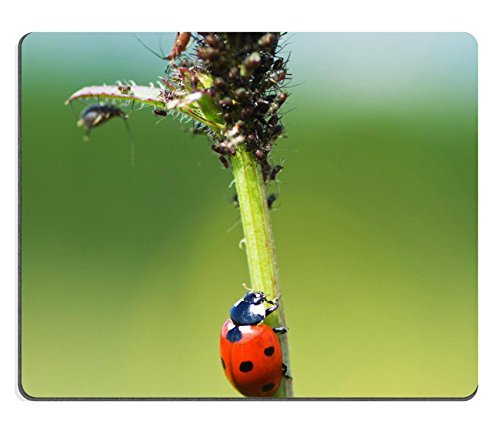 liili-mouse-pad-natural-rubber-mousepad-the-ladybug-creeps-on-a-stalk-to-plant-louse-image-id-219394