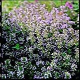 South Eastern Horticultural Pack Thyme (Thymus Vulgaris) Seed Suffolk Herbs Garden Seeds