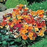 Country Value NEMESIA Carnival Mixed Seeds