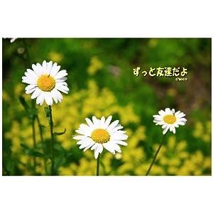 ポストカード文字入り「ずっと友達だよ」by Chaco-えはがき絵葉書postcard-