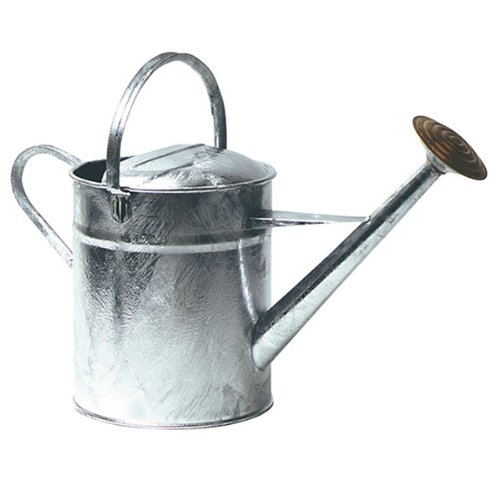 Parasene 2 Gallon Galvanised Watering Can with Brass Rose
