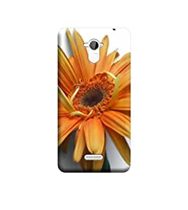 TransMute Premium Printed Back Case Cover With Full protection For CoolPad Note 3 (Designer Case)