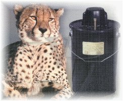 Love-Less Ash Vacuum Cheetah Ii Black