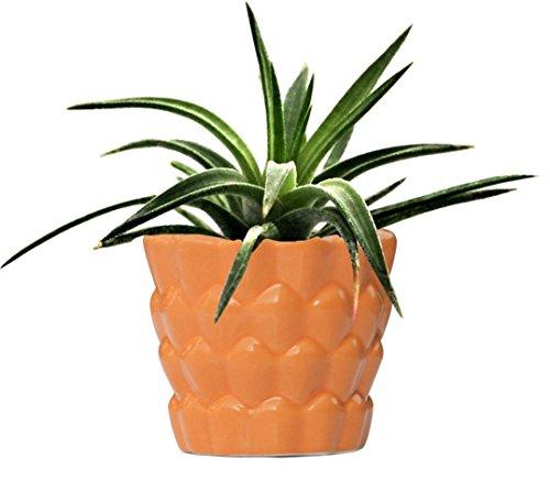 souvnear-117-cm-ceramic-flower-pot-planter-for-indoor-and-outdoor-neon-carrot-decorative-orange-plan