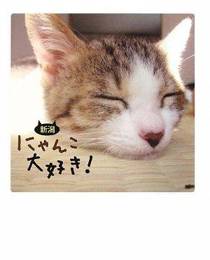 新潟 にゃんこ大好き!