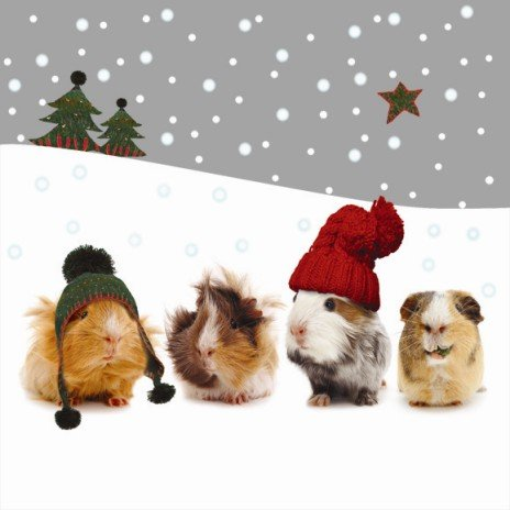 Otter House Christmas Gang Guinea Pig Cards