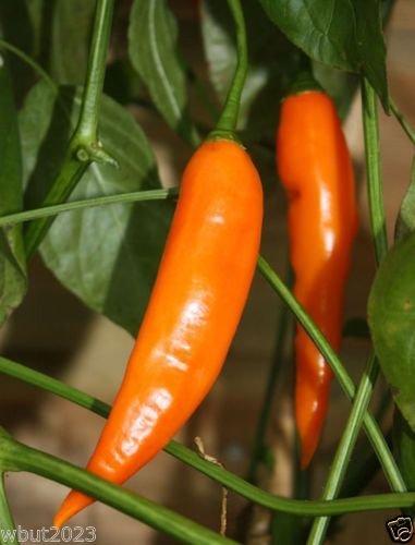 Aji Amarillo-Peruvian Yellow Chile Pepper-Fresh,Roasted,dried,Sauces,Paste,Salsa (Aji Salsa compare prices)
