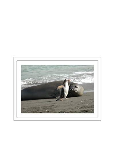 Getty Images Beach Buddies