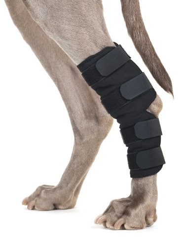 Can You Splint Dog S Leg