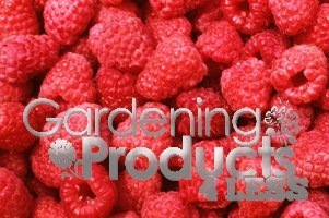 Raspberry GardeningProducts4Less Raspberries Strawberries Blackberry