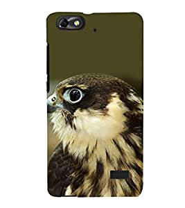 printtech Nature Bird Bald Eagle Back Case Cover for Huawei G Play Mini