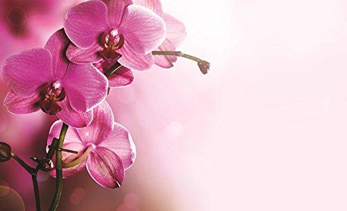 foto-tappezzeria-fotografica-foto-orchidee-1033-sfondo-blu-carta-254-cm-largo-x-184-cm-alto