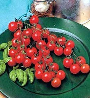Sweet Million FNT Hybrid Cherry Tomato 30 Seeds - FREE SHIPPING ON ADDITIONAL HIRTS SEEDS ORDERED & PAID WITH ONE PAYMENT! - Buy Sweet Million FNT Hybrid Cherry Tomato 30 Seeds - FREE SHIPPING ON ADDITIONAL HIRTS SEEDS ORDERED & PAID WITH ONE PAYMENT! - Purchase Sweet Million FNT Hybrid Cherry Tomato 30 Seeds - FREE SHIPPING ON ADDITIONAL HIRTS SEEDS ORDERED & PAID WITH ONE PAYMENT! (Hirt's, Home & Garden,Categories,Patio Lawn & Garden,Plants & Planting,Outdoor Plants,Vegetables,Tomatoes)