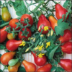 Red Fig Tomato - 20 Seeds - Pear Shaped Heirloom