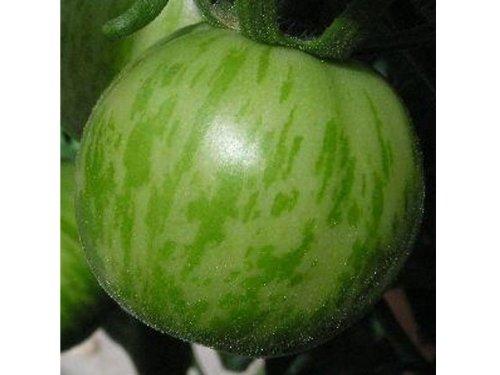 besondere tomatenpflanzen alte tomatensorten und wohlschmeckende neuz chtungen. Black Bedroom Furniture Sets. Home Design Ideas