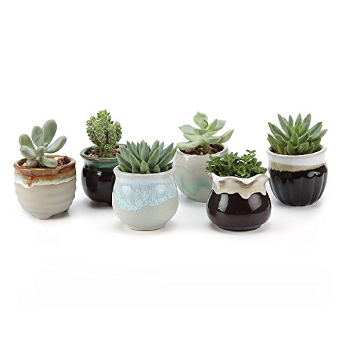 SUN-E 6 in Set 2.5 Inch Ceramic Flowing Glaze Black&White Base Serial Set Succulent Plant Pot Cactus Plant Pot Flower Pot Container Planter (Succulent Plants In Pots compare prices)