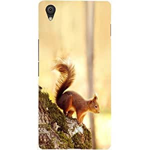 Casotec Squirrel Design Hard Back Case Cover for Oneplus X