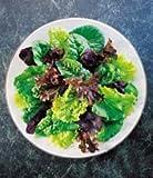 Premier Seeds Direct LET22 Lettuce Mixed Leaf Mesclun Mix Seeds (Pack of 2500)