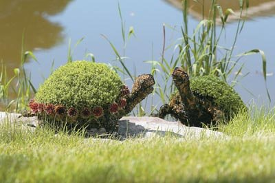Turtle Topiary Form