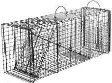 Live Animal Trap: Raccoon, Oppossum or Groundhog Transfer Trap with Rear Sliding Door