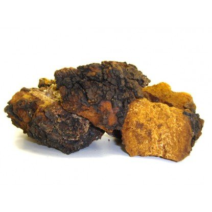 Chaga Mushrooms Whole 16 Oz.