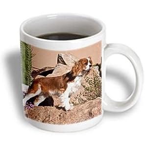 3dRose Cavalier King Charles Spaniel Dog US03 ZMU0008 Zandria Muench Beraldo Ceramic Mug, 11-Ounce