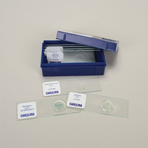 Beginner'S Algae Microscope Slide Set