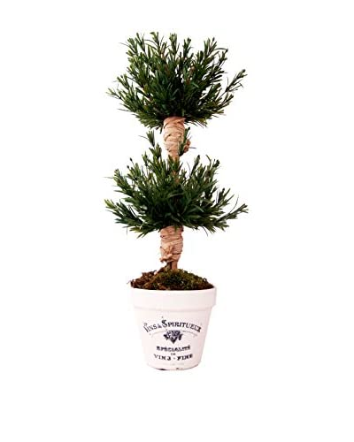 Creative Displays 2-Tier Variegated Rosemary Topiary in Embellished Clay Container, Dark Green/White
