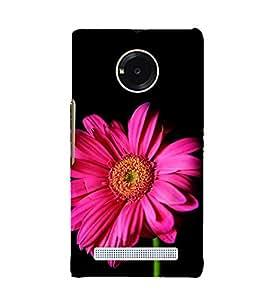 ifasho Designer Phone Back Case Cover YU Yuphoria :: YU Yuphoria YU5010 ( Number 12 Twelve )