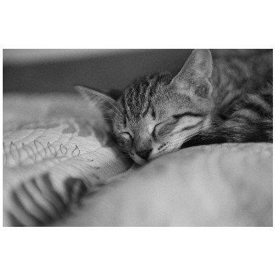 ポストカード「眠る子猫たち・猫の子供cat」白黒・モノクロフォトカード絵はがきハガキ葉書postcard