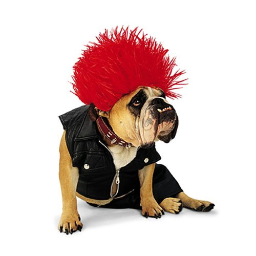 Paper Magic Group Zelda Punk Dog Pet Costume
