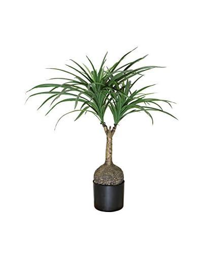 Winward Nolina Palm Tree, Green