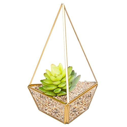 Homeideas clear glass pyramid tabletop succulent plant