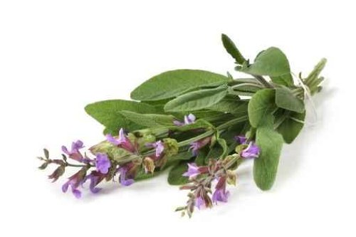 Fresh-picked Bunch of Flowering Sage - 52