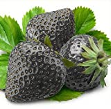 50 Seeds Black Strawberry Seeds