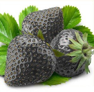 50 Seeds Black Strawberry Seeds : Fruit Plants : Patio, Lawn & Garden