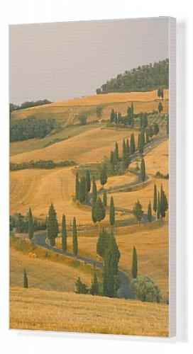 canvas-print-of-cypress-trees-along-rural-road-near-pienza-val-d-orica-siena-province