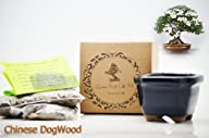 9GreenBox – Chinese DogWood Bonsai Seed Kit- Gift – Complete Kit to Grow Dwan Red Wood Bonsai from…