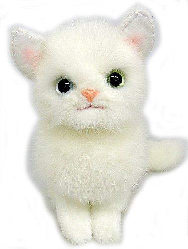 白猫可爱图片 壁纸
