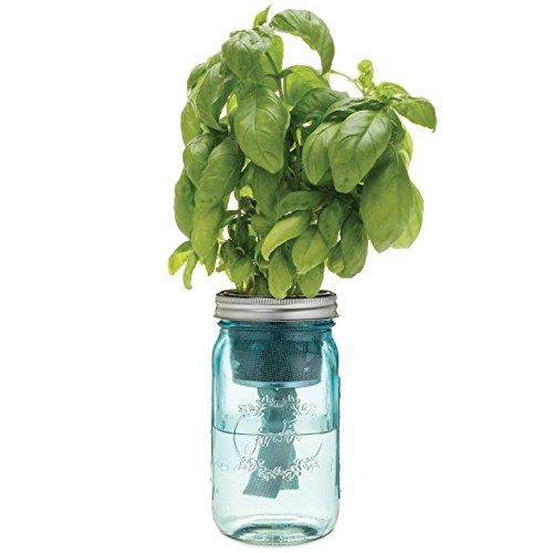 Modern Sprout Garden Jar, Basil (Mason Jars Quidsi compare prices)