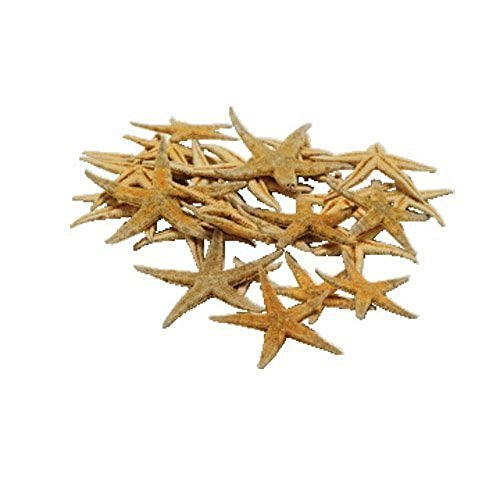 Real Star Fish (Approx 30 Pieces) Starfish