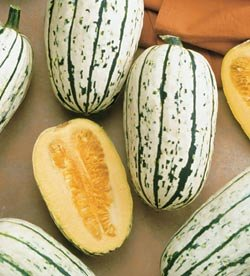 Squash Cornell's Bush Delicata - Park Seed Squash Seeds - Buy Squash Cornell's Bush Delicata - Park Seed Squash Seeds - Purchase Squash Cornell's Bush Delicata - Park Seed Squash Seeds (Park Seed, Home & Garden,Categories,Patio Lawn & Garden,Plants & Planting,Outdoor Plants,by Moisture Needs,Regular Watering)