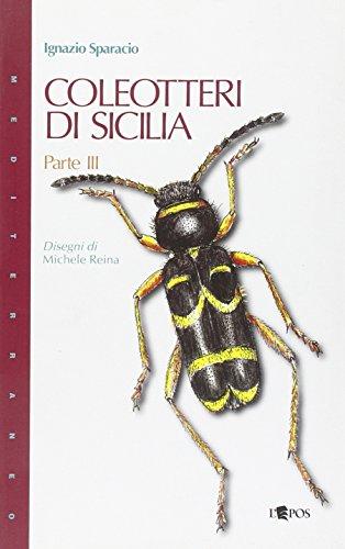 coleotteri-di-sicilia-3
