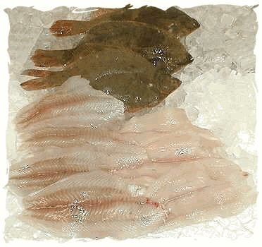 Fresh Atlantic Flounder Fillets