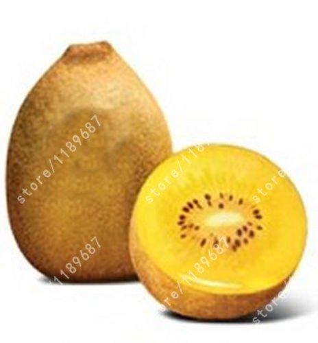 semi-di-kiwi-no-ogm-possono-mangiare-di-alberi-da-frutto-semi-kiwi-yangtao-kiwi-seeds-indoor-e-outdo