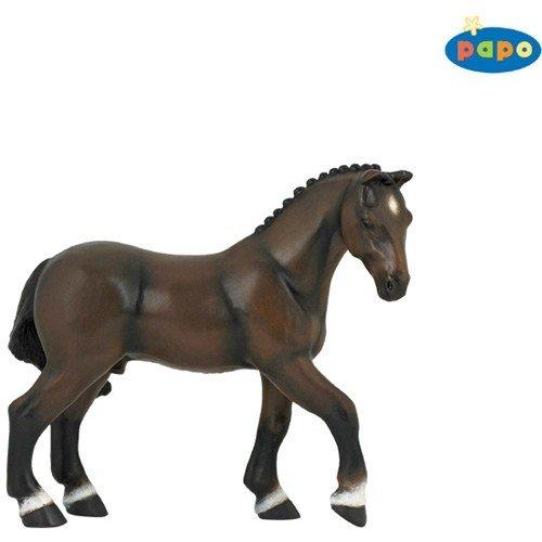 French Saddle Horse